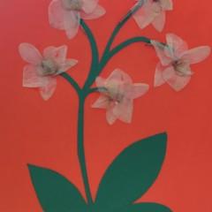 Joelle - pressed flowers