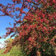 Jane M - apply Pally blossom
