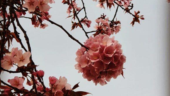 susan cherry